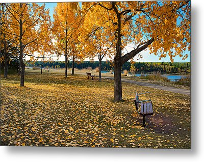 Autumn In Calgary Metal Print by Trever Miller