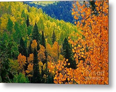 Autumn In Colorado Metal Print by Richard and Ellen Thane