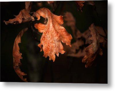 Autumn Is In The Air Metal Print by Tom Mc Nemar
