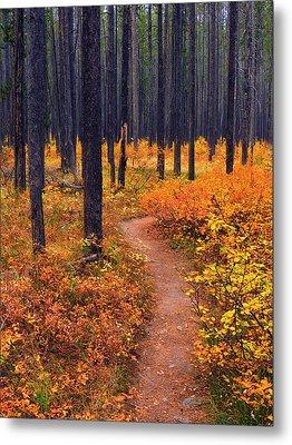 Autumn In Yellowstone Metal Print by Raymond Salani III