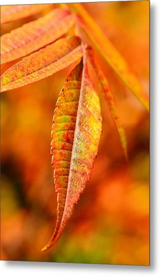 Autumn Leaves Metal Print by Gynt
