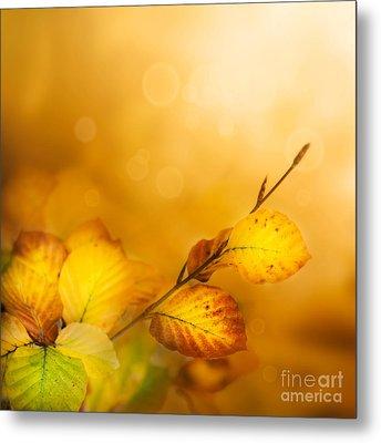 Autumn Leaves Metal Print by Mythja  Photography
