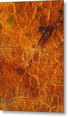 Autumn Leaves No.14 Metal Print by Daniel Csoka