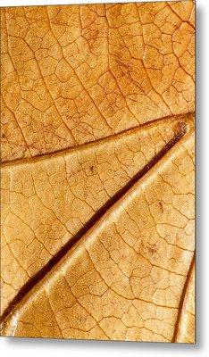 Autumn Leaves No.4 Metal Print by Daniel Csoka