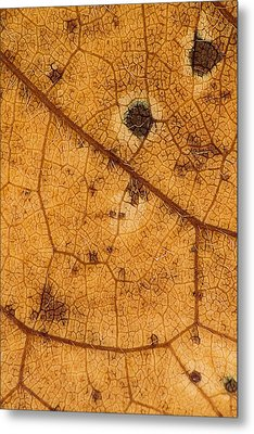 Autumn Leaves No.6 Metal Print by Daniel Csoka