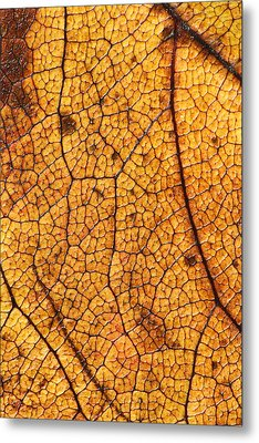 Autumn Leaves No.8 Metal Print by Daniel Csoka