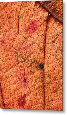 Autumn Leaves No.9 Metal Print by Daniel Csoka