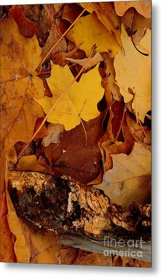 Autumn Leaves Of Yellow And Brown Metal Print by ImagesAsArt Photos And Graphics