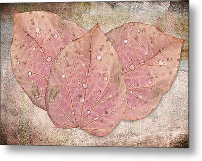 Autumn Leaves With Water Drops  Metal Print by Angela A Stanton