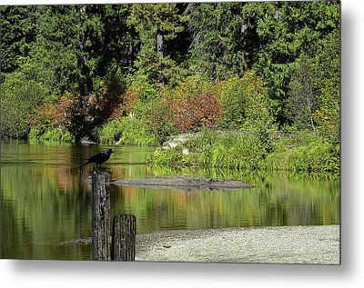Autumn Melody Metal Print by Diane Schuster