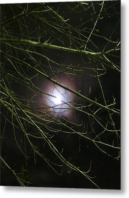 Autumn Moon Peeks Through The Branches Metal Print by Guy Ricketts