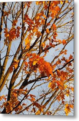 Autumn Orange Metal Print by Guy Ricketts