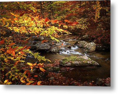Autumn Stream Metal Print by Bill Wakeley