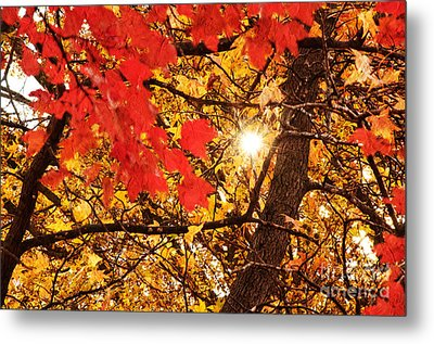 Autumn Sunrise Painterly Metal Print by Andee Design