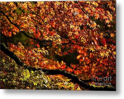 Autumn's Glory Metal Print by Anne Gilbert