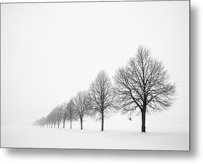 Avenue With Row Of Trees In Winter Metal Print by Matthias Hauser