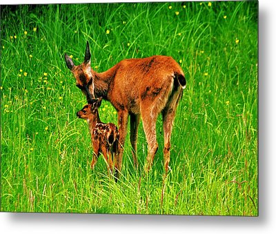 Aww Mom Metal Print by Benjamin Yeager