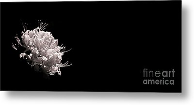Azalea Black And White Floral I Metal Print by Holly Martin