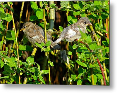 Babies Afraid To Fly Metal Print by Frozen in Time Fine Art Photography