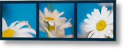 Baby Blue Triptych Metal Print by Lisa Knechtel