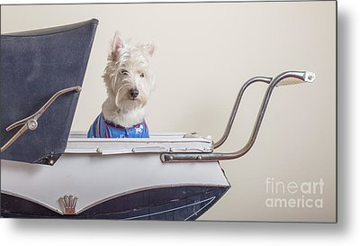 Baby Buggy Ride Metal Print by Edward Fielding