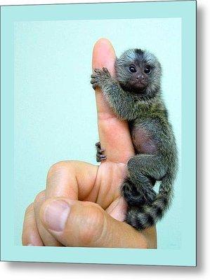 Baby Finger Monkey Aqua Background Metal Print by L Brown