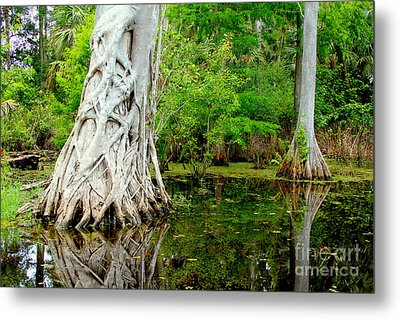 Backcountry Metal Print by Carey Chen