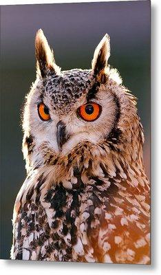 Backlit Eagle Owl Metal Print by Roeselien Raimond