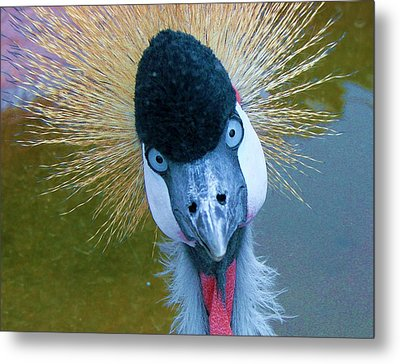 Bad Hair Day Metal Print by Margaret Bobb