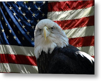 Bald Eagle 321 Metal Print by Joyce StJames