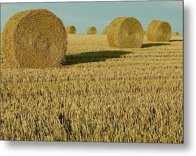 Bales Of Grain At Harvest Time Metal Print by Cyril Ruoso
