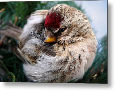 Ball Of Feathers Metal Print by Christina Rollo