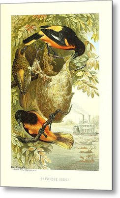 Baltimore Orioles Metal Print by Philip Ralley
