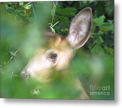 Bambi In The Woods Metal Print by David Lankton
