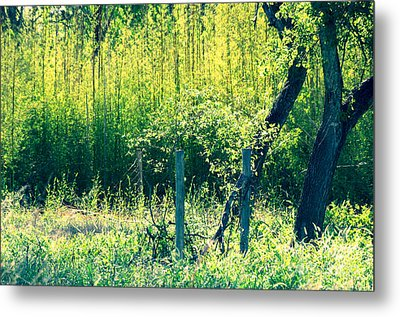 Bamboo Background Metal Print by Gary Richards
