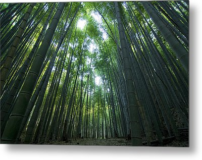 Bamboo Forest Metal Print by Aaron S Bedell