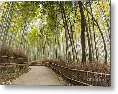 Bamboo Forest Arashiyama Kyoto Japan Metal Print by Colin and Linda McKie
