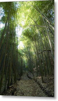 Bamboo Road Metal Print by Aaron S Bedell