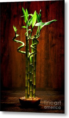 Bambooesque  Metal Print by Olivier Le Queinec