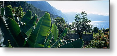 Banana Trees In A Garden Metal Print by Panoramic Images