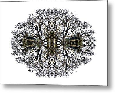Bare Tree Metal Print by Debra and Dave Vanderlaan