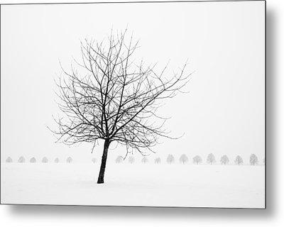 Bare Tree In Winter - Wonderful Black And White Snow Scenery Metal Print by Matthias Hauser