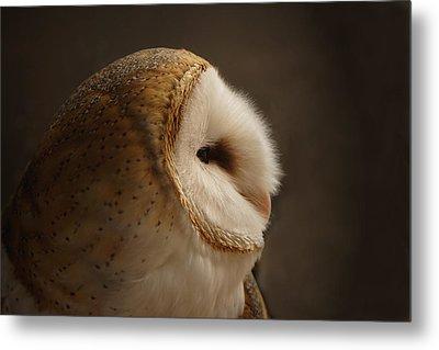 Barn Owl 3 Metal Print by Ernie Echols