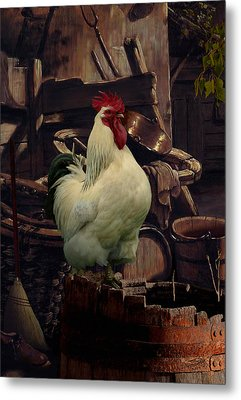 Barnyard Rooster Metal Print by Matthew Schwartz