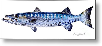 Barracuda Metal Print by Carey Chen