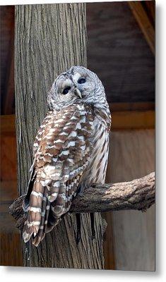 Barred Owl 264 Metal Print by Joyce StJames
