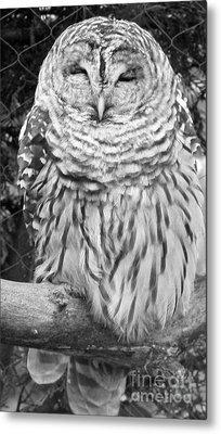 Barred Owl In Black And White Metal Print by John Telfer