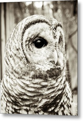 Barred Owl Metal Print by Joy StClaire