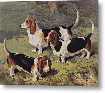 Basset Hounds Metal Print by English School