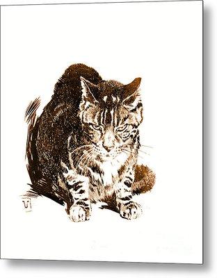 Battleship Cat 1898 Metal Print by Padre Art